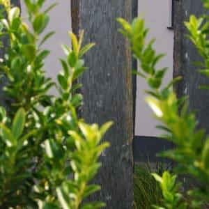 Schiefer Sichtschutzplatten Nero versetzt Garten Nahaufnahme Naturstein Dekosteine